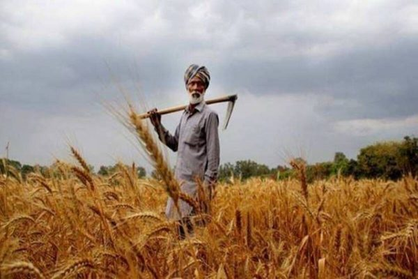 Supreme Court-appointed panel on farm laws submits report