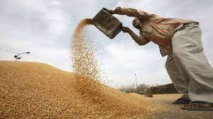 Wheat procurement in Punjab to begin from April 10