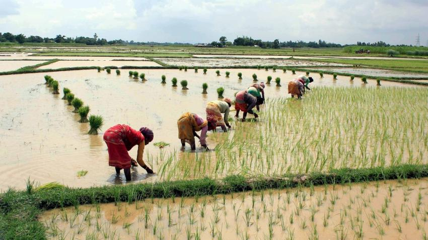 Heavy rains in Uttar Pradesh boosts kharif sowing: Agriculture Minister