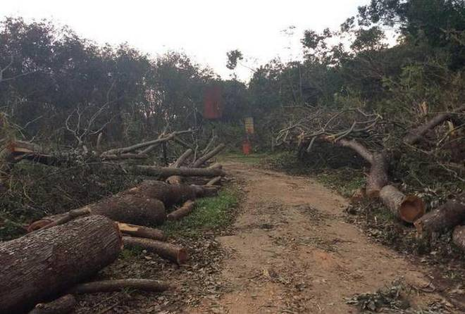 2,000 acres of forest land recovered in Jharkhand