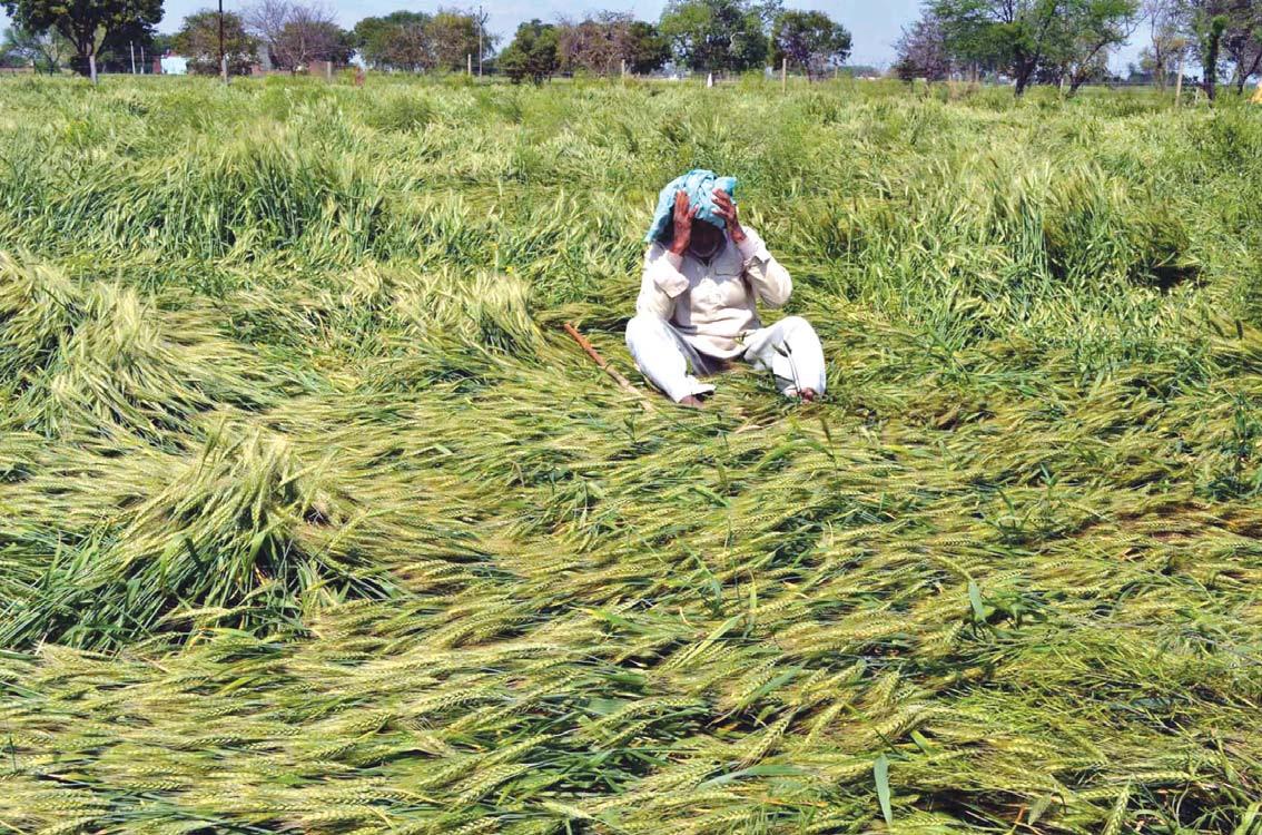 Marathwada gets Rs 819 crore relief for unseasonal rains