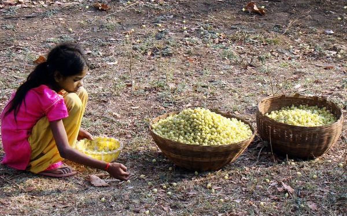 Chhattisgarh: Hand sanitizer developed from Mahua spirit