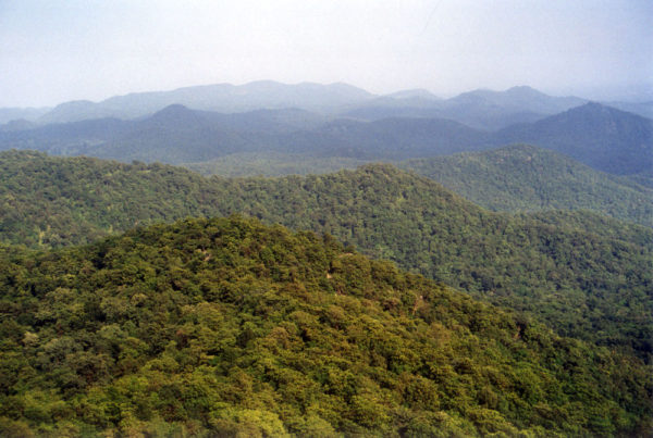 Tree cover in Gujarat shrank between 2006 and 2017: CAG