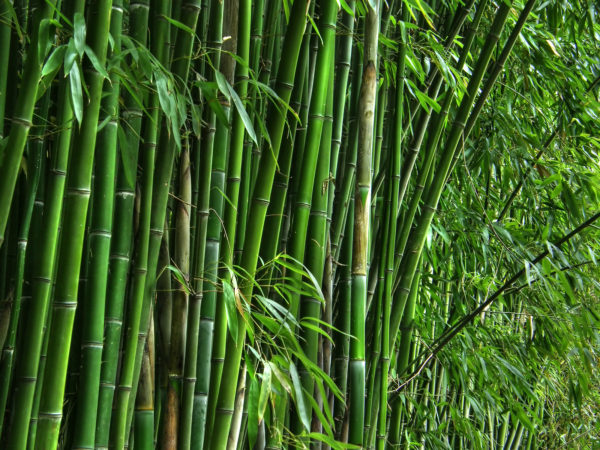 Narendra Singh Tomar launches National Bamboo Mission logo, 22 clusters