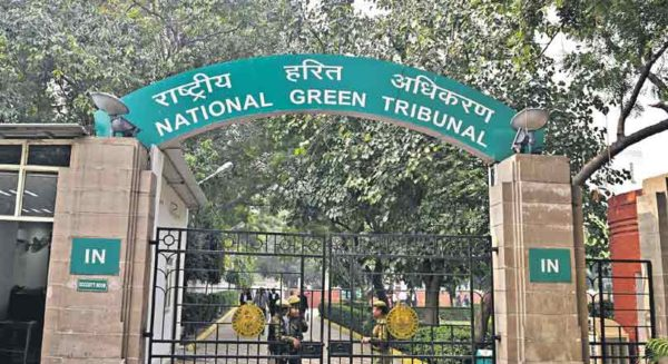 Stop all construction without environmental clearance in Jharkhand: NGT