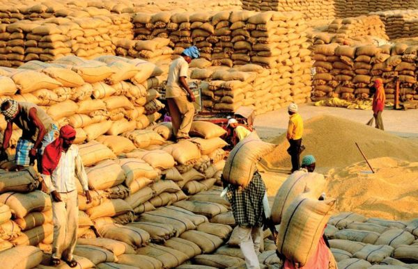 Government agencies procure 44,809 tonnes of paddy in Punjab, Haryana