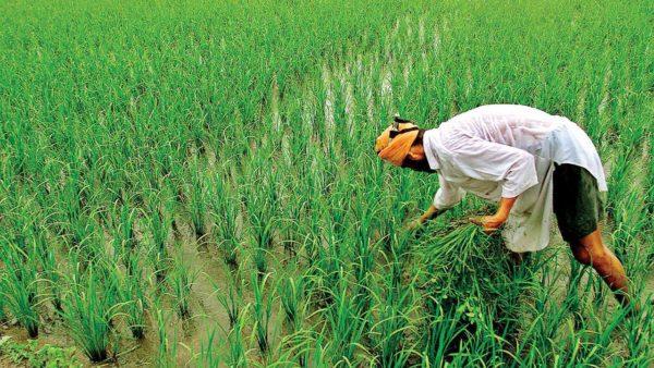 Rahul Gandhi asks Narendra Modi government to withdraw farm bills, guarantee MSP