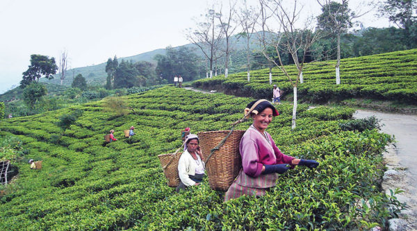 Mamata Banerjee announces housing programme for tea workers