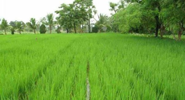 Telangana to strengthen Agriculture Department with Marketing Division