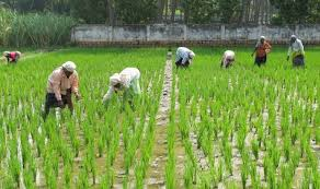 Telangana waived off Rs 27,000 crore crop loans in six years: KTR