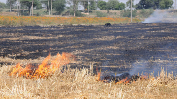 Over 23,000 farm fire incidents in Punjab so far this season: Official data
