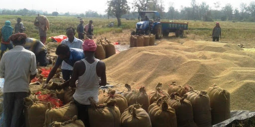 Paddy procurement to begin from December 1 in Chhattisgarh