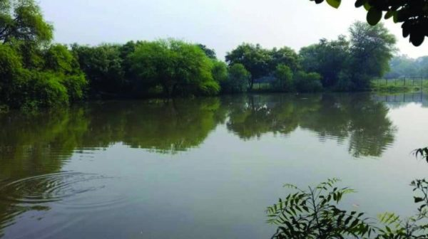 Set up nodal agencies to restore water bodies: NGT asks states, Union Territories