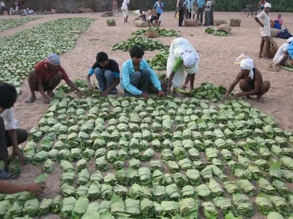 Odisha announces Rs 92.37 crore financial assistance for Kendu workers