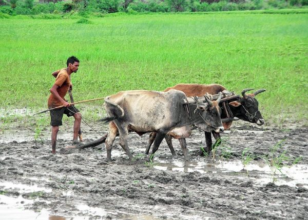 Drought-hit farmers in Chhattisgarh to get Rs 9,000 per acre aid